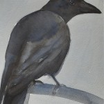Anne van As - Crow(blue) 2017 Oost-Indische inkt, acryl en potlood op artistico Fabriano 300 grams, 20 x 15 cm ingelijst 30x24cm